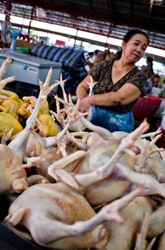 Polli in vendita in un mercato di Paksé